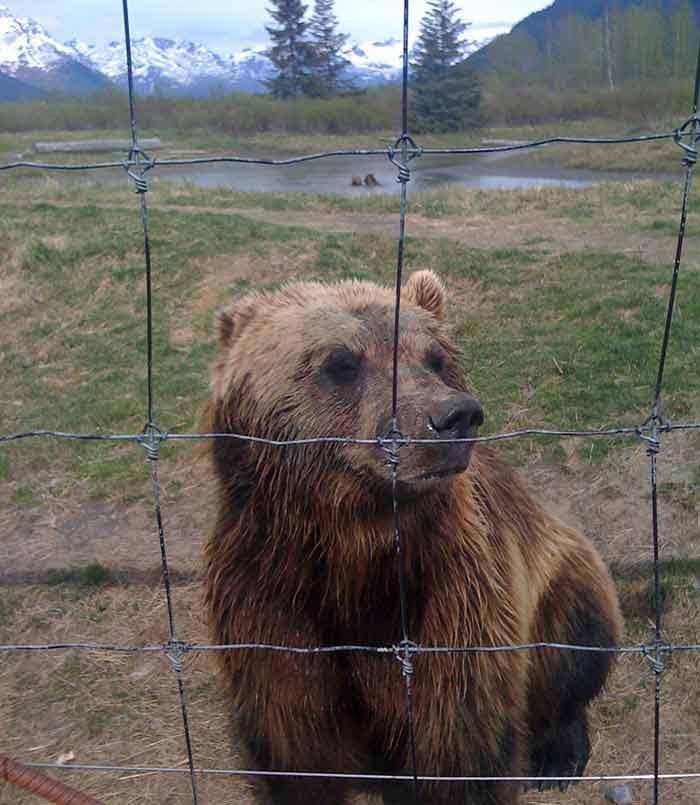 sanjati medveda ili mecku